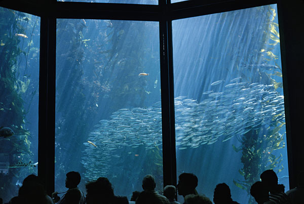 Monterey Bay Aquarium How To Save On Tickets