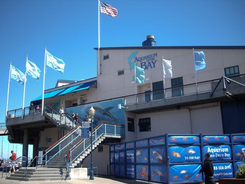 Discover Aquarium Of The Bay On Pier 39 In San Francisco