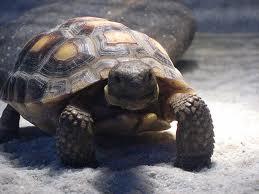 Slow Poke!..