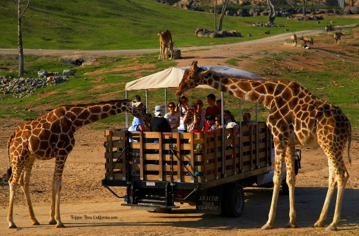 San Diego Zoo Safari Park Info Tickets Hours Directions