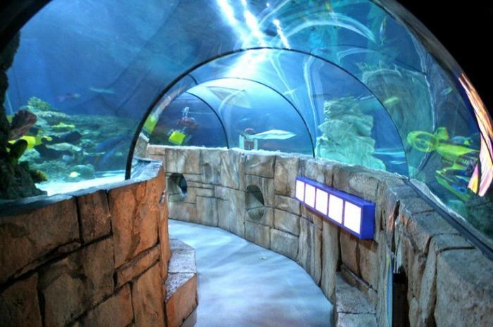Mall Of America Aquarium Discount