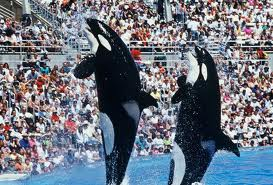 Shamu at Sea World..