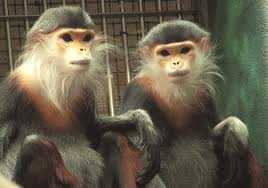Monkeys!..