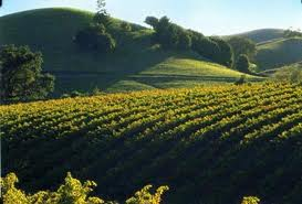 California Vineyard..