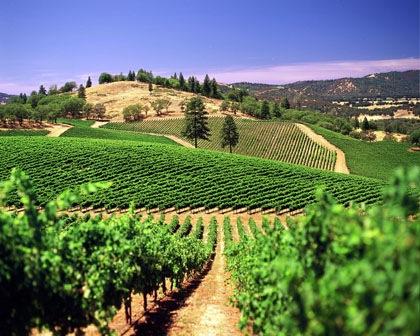 California Vineyard..