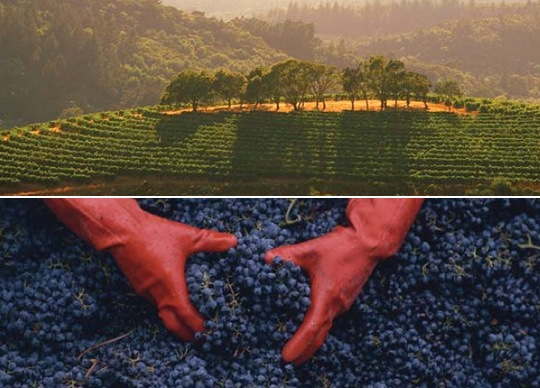 Click here to learn more about types of red wine...