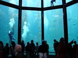List of all the Aquariums in California..